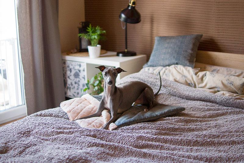 Śpiworek dla psa
